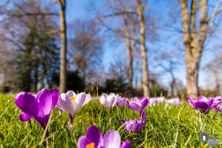 Het Noorderplantsoen in bloei