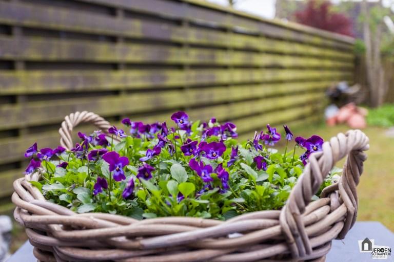 109/365 De bloemetjes buiten zetten